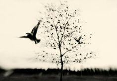 Δύο ποιήματα: «Τα όρνια» & «Η φυγή» | Fractal