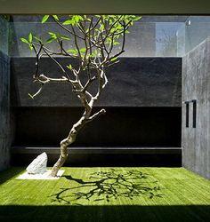 Interior garden | Garden inspiration for adamchristopherdesign.co.uk