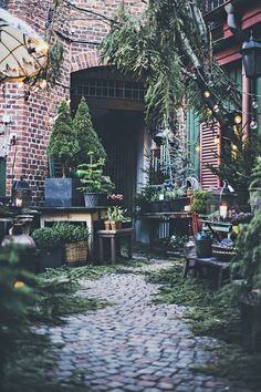 Urban Garden Little flower shop Christmas Garden, Winter Garden, Winter Christmas, Christmas Greenery, Green Christmas, Christmas Tree, Garden Shop, Dream Garden, Garden Path
