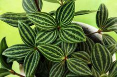 Je T'adore, Plant Leaves, Plants, Soft Light, Sun, Fresh Green, Terrariums, House Plants, Cats
