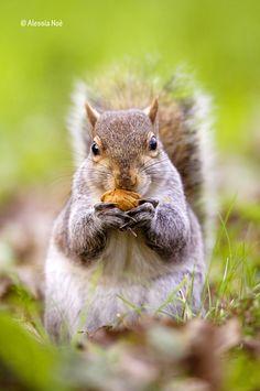 good my walnut by Alessia Noè, via 500px