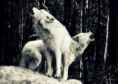 With Esiyta Goddess of the Snow { ~ ~ '4' · · · 》》```···.... Sister of Skadi Another goddess of the Snow }
