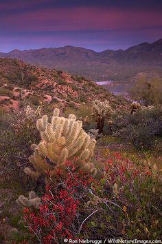 ✭ Bartlett Lake near Phoenix AZ