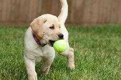 NuVet Labs Plus - Canine Supplements Reviews!