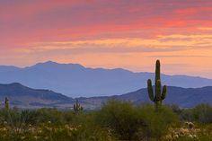 Gated Retirement Resort Community for in Yuma Arizona Yuma Arizona, Tucson Arizona, Arizona Cactus, New Mexico, Arizona Sunrise, Nevada, Le Far West, Best Photographers, Route 66