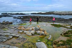The coastline at Schoenmakerskop with all its rocks, pools and gullies really lends itself to exploring youngsters. Like a free treasure. Port Elizabeth South Africa, September 31, Daily Photo, Nelson Mandela, Explore, Outdoor, Outdoors, Exploring, Outdoor Living