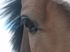 Closeup Horse Pictures, Close Up, Horses, Cute, Animals, Animales, Pictures Of Horses, Animaux, Kawaii