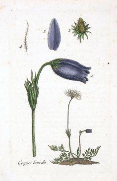 Vintage Botanical Flowers