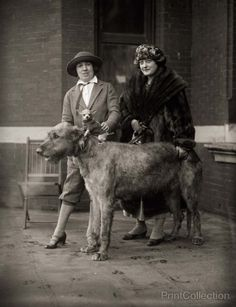 Women with an Irish wolfhound and a chihuahua.