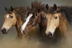Three Horses