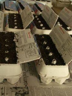 Start seedlings in egg cartons #reusing #kidsactivity #gardening