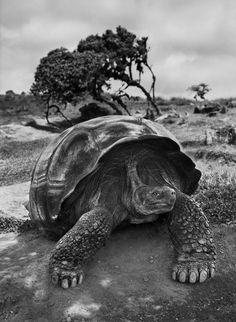 El paisaje, el ser vivo, el arte fotográfico y el entorno natural, vale defender todo.