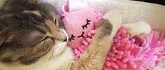 Resultado de imagen para cosas para que los gatos duermen