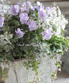 Container Flowers, Container Plants, Container Gardening, Flower Basket, Flower Pots, Hanging Baskets, Pansies, Pretty Flowers, Watercolor Flowers