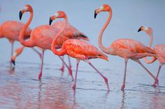 The beautiful flamingos in Holbox!
