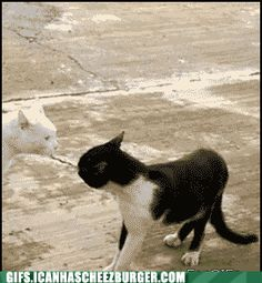 Funny Animal Gifs - Classic GIF: Hunchback of Notre Chat