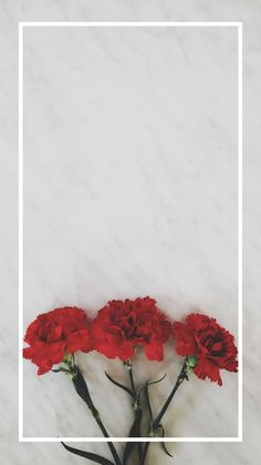 Iphone Wallpaper - Floral Wallpaper by - Floral Wallpaper Iphone, Wallpaper Tumblr Lockscreen, Wallpaper For Your Phone, Trendy Wallpaper, Pretty Wallpapers, I Wallpaper, Aesthetic Iphone Wallpaper, Flower Wallpaper, Aesthetic Wallpapers
