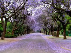 Jacaranda Street,Mackenzie street,Brooklyn,Pretoria,South Africa close to our former neighbourhood Great Places, Places To See, Beautiful World, Beautiful Places, Port Elizabeth, Kruger National Park, Pretoria, African Animals, Holiday Time