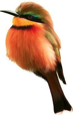 Birds 4 (30).png