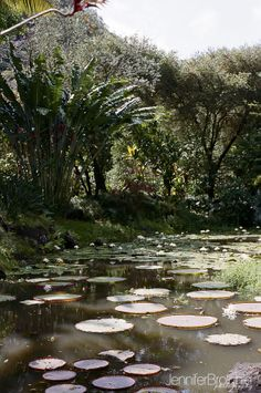 Waimea Falls, North Shore, things to do, places to visit, hiking on Oahu, Botanical Gardens, Waterfalls #film www.jenniferbrotchie.com