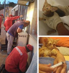 "Joelalmeidaptg  found a cat ""crying for help"" because he was stuck in an electrical post, suspended only by his head. Because the cat seemed to have so little energy, Joelalmeidaptg assumed that he had been stuck for a long while. He had no idea how the cat had gotten that way, but he knew the cat needed to be helped."