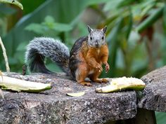 A Squirrel Virus May Have Killed Three Squirrel Breeders in Germany | Smart News | Smithsonian