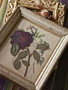 Picturesque pressed flowers in antique photo frames