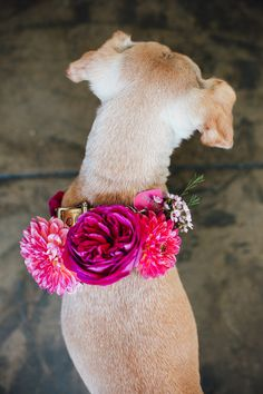 flower adorned pup