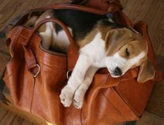 this could so be miller.. he can snuggle on anything and always looks so comfy