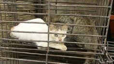 Save Cats and Dogs in South Korea from Brutal Deaths PLEASE PRAY FOR THESE ANIMALS! THEY WOULD BE YOUR BEST FRIEND-BUT THEY FACE TORTURE BY EVIL HUMANS! SIGN SHARE!