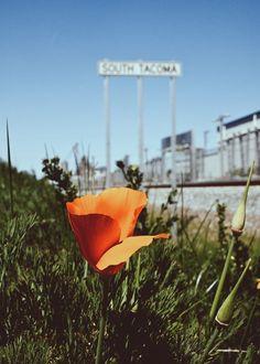 South Tacoma Spring time! #PNW #Marketingpugetsound