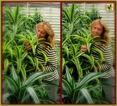 Living ànd working in a Green STRIPED world,...