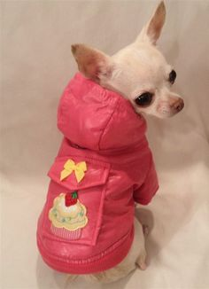 083109a59be Pink Puppy Cakes Jacket Cake Dog