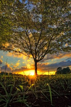 I Fell Into A Dream by JustinDeRosa-pennsylvania