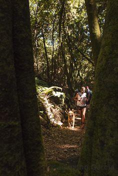 Salida fotográfica con @Wiebke Haasper La Palma al sendero La Caldera del Agua by Juancho Garcia on 500px