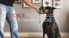 Muzzle Acclimation Aggressive Dog, Veterinary Medicine, Stress, Youtube, Free, Veterinary Studies, Psychological Stress, Youtubers, Youtube Movies