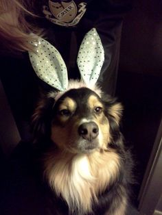 The Weird Easter Bunny came to town! Hoppy Easter, Easter Bunny, Animals Beautiful, Cute Animals, Here Comes Peter Cottontail, Crazy Dog Lady, Bow Wow, Jelly Beans, Doggies