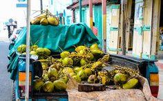 Frisch gepflückte Kokosnüsse in der Karibik © Julia Schafhauser
