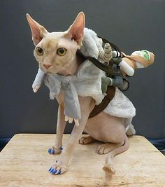 So cold his toes are blue! When you're a hairless cat on Hoth, you'd better bring a Tauntaun. And Luke.