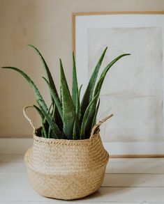 From seagrass to willow peat: put your plant in a nice basket! Houseplants Safe For Cats, Home Flowers, Aesthetic Bedroom, Interior Plants, Gras, Diy Room Decor, Home Decor, Cactus Plants, Aloe Vera