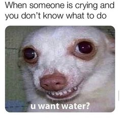"""Relatable Memes For People Who Just Need To Feel Heard - Funny memes that """"GET IT"""" and want you to too. Get the latest funniest memes and keep up what is going on in the meme-o-sphere. Funny Memes Tumblr, Funny Instagram Memes, Super Funny Memes, Funny Dog Memes, Crazy Funny Memes, Really Funny Memes, Stupid Memes, Funny Tweets, Funny Relatable Memes"""
