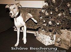 """Hundetrick: Schöne Bescherung, """"Pinkeln"""""""