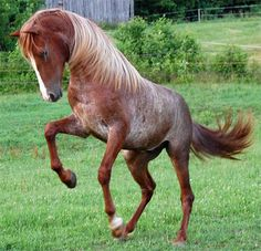Rare colored horses! POST AWAY!! - Page 380