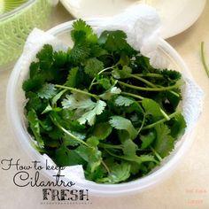 How to keep cilantro fresh