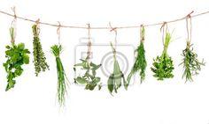 Fototapeta Świeże zioła wiszące na białym tle