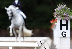 Janet Foy explains the purpose and place of dressage movements in the arena.