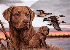 Desert Winds Best of Breed Chesapeake Bay Retrievers feature OFA & CERF Tested Sires and Dams. Our puppies are ideal for hunting, field and obedience trials, therapy dogs or great family pets. Bass Fishing Pictures, Hunting Drawings, Cat In Heat, Duck Art, Ducks Unlimited, Dog Artwork, Cat Drinking, Large Dog Breeds, Therapy Dogs