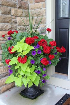 Cool 50 Fresh and Beautiful Container Garden Flowers Ideas https://homeideas.co/14052/50-fresh-and-beautiful-container-garden-flowers-ideas Outdoor Flower Planters, Planters For Front Porch, Urn Planters, Planters Flowers, Potato Vine Planters, Geranium Planters, Outdoor Potted Plants, Potted Geraniums, Geraniums Garden