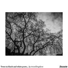 Trees in black and white postcard