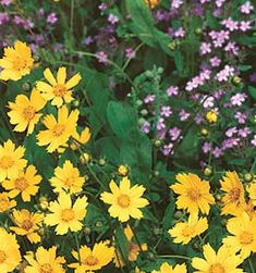 How to Dry Annual Flowers - (all really good ideas here, just a note - if you live in Utah the sand from the Great Salt Lake or the Bonneville Salt Flats is the very best sand for drying flowers.)